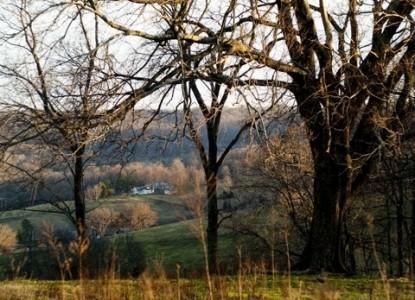 Walnut Hill House B&B Retreat trees