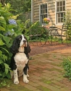 Woolverton Inn dog friendly