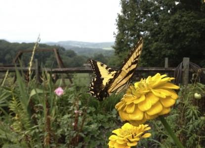 Brierley Hill Bed & Breakfast butterfly