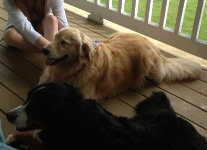 Brierley Hill Bed & Breakfast dogs