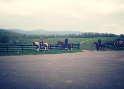 Marriott Ranch & Inn at Fairfield Farm, horses