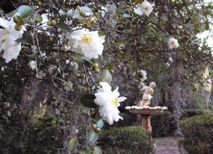 Butler Greenwood Plantation Garden