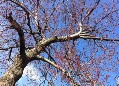 Adam's Inn Bed & Breakfast fall tree