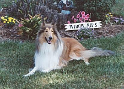 Widow Kip's Country Inn, dog
