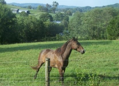 Walnut Hill House B&B Retreat horse