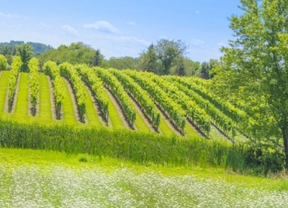 Vineyards & Wineries near Hillbrook Inn