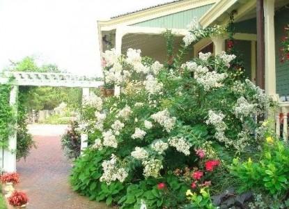 Williams Cottage Inn flowers