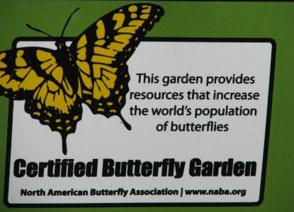 Butterfy Garden