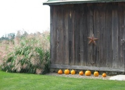 Jackson Run Barn and Pumpkins