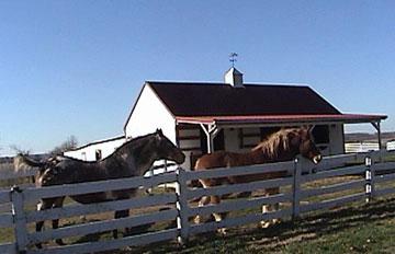 Oak Hill Farm and Cabins Horse Rescue Program