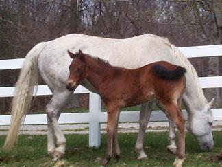 The Huntington Bed & Breakfast, horses