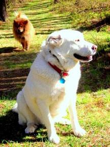 Clamber Hill Inn & Restaurant dog