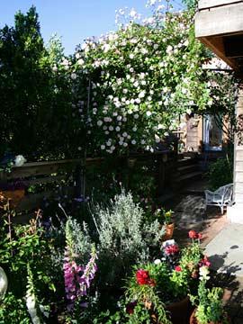 Micasa Temporary Lodging garden