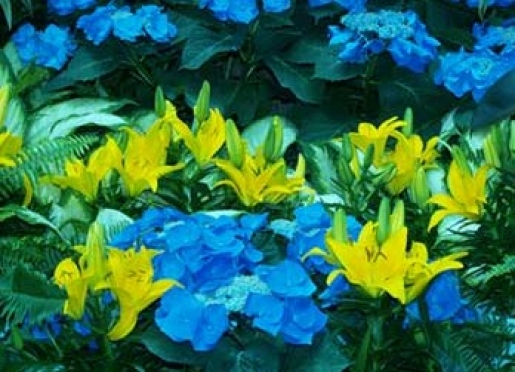 Daylilies & Hydrangea