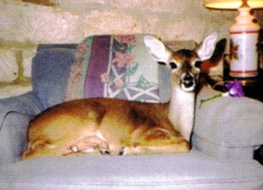 Our pet deer, Angel, was a pet many years ago. She could say,