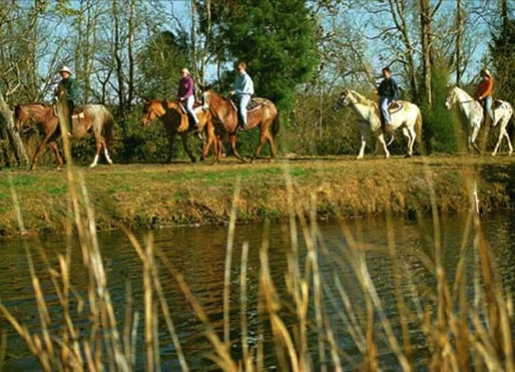 Trail rides are offered daily by the Middleton Stables