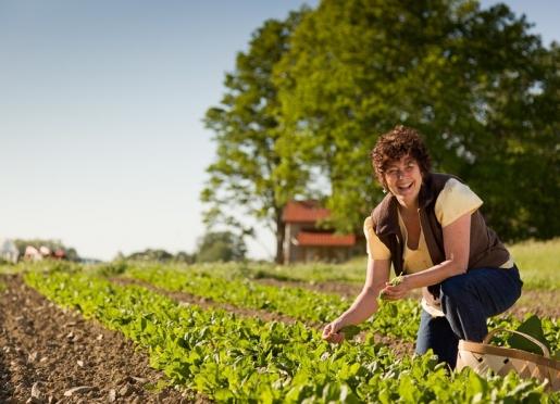 Rose gardening for breakfast ingredients