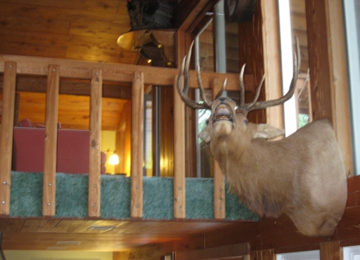 Elk Mount in Great Room