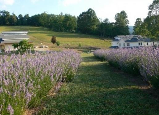 Beliveau Estate - Blacksburg, Virginia