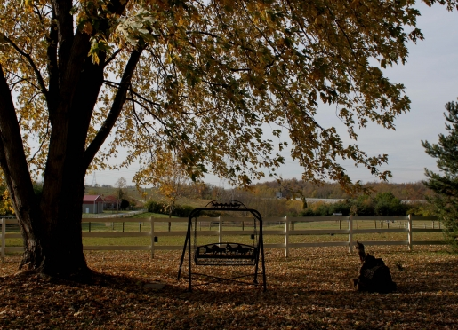 Lots of places to sit, swing, walk, pet furry noses & relax at First Farm Inn, just outside of Cinci