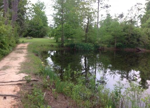 Pond and Dam