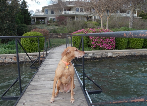 Dog friendly lodging at Hot Springs luxury Bed & Breakfast