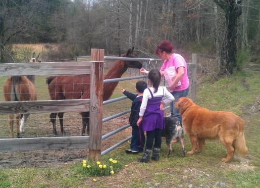 Guests feeding our llamas
