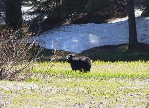 Late Spring at the Yosemite Rose