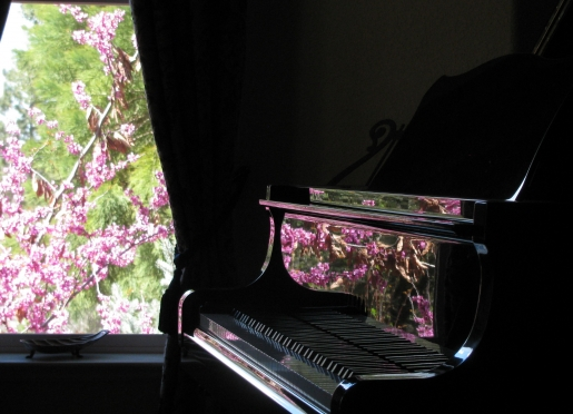 Magic Moment-- Red Bud reflected in the piano