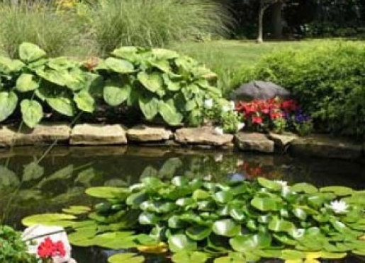 Enjoy our pond and stream and lavish gardens.