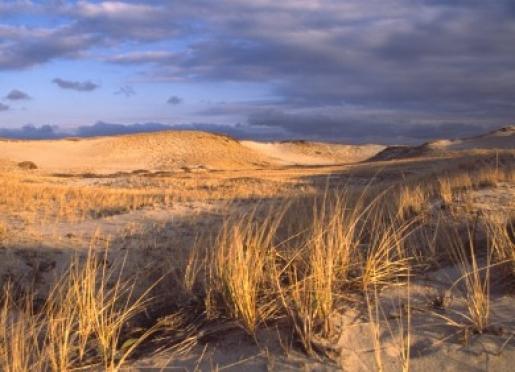 Sandy Neck Beach a mile from the Inn