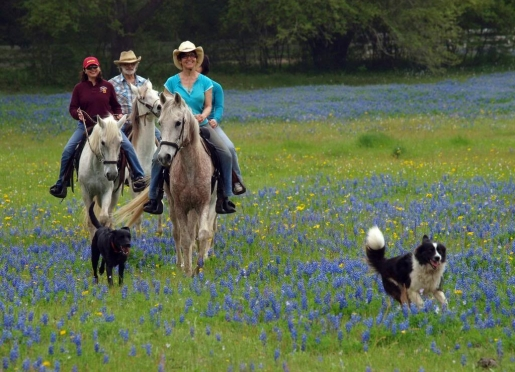 Blisswood Bed and Breakfast - a Texas Hill Country Bed and Breakfast on a Working Ranch