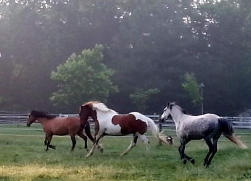 Watching the horses play is more relaxing than a movie.