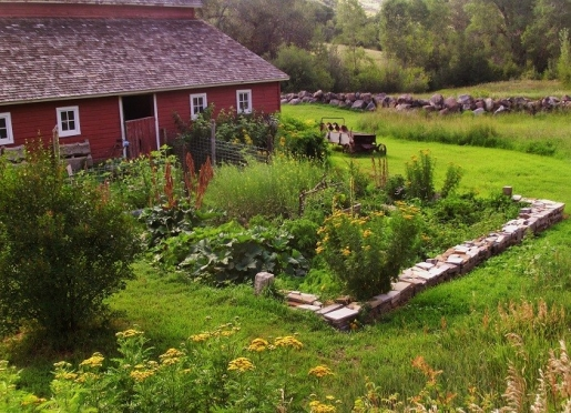 Summer veggie garden near barn