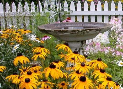 Garden Closeup