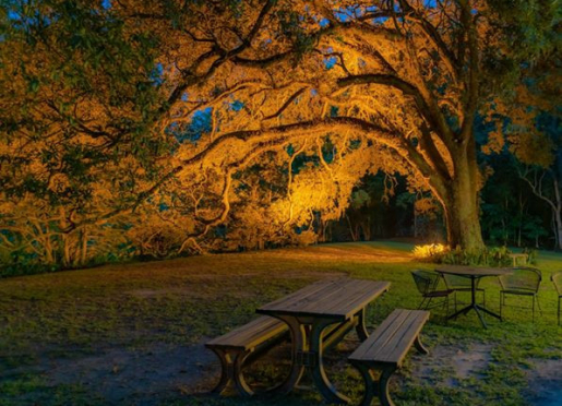 Under the oaks, enjoy listening to the owls